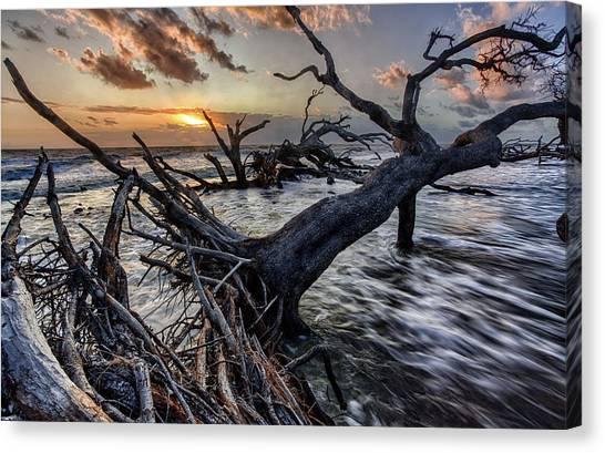 Driftwood Beach 5 Canvas Print