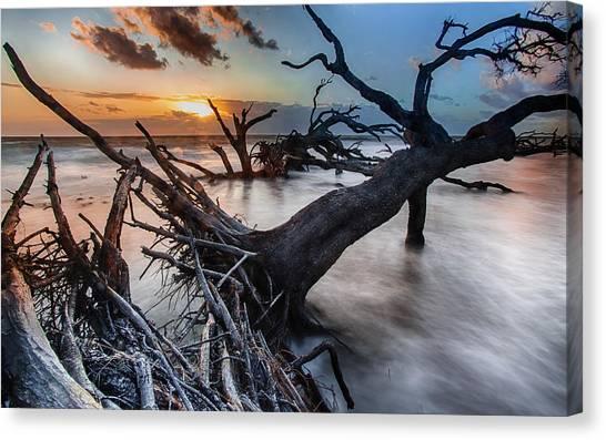 Driftwood Beach 6 Canvas Print