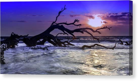 Driftwood Beach 9 Canvas Print