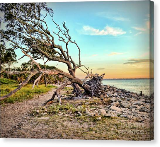 Driftwood Beach Morning 2 Canvas Print