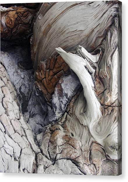 Driftwood Canyon Vii Canvas Print by D Kadah Tanaka