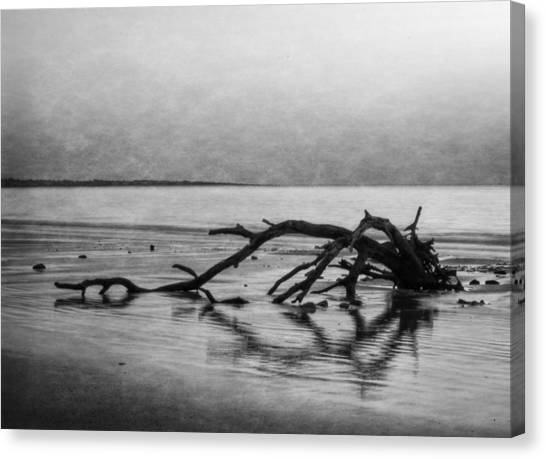 Driftwood Dream In Black And White Canvas Print