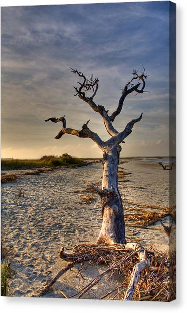 Driftwood  Canvas Print by Drew Castelhano