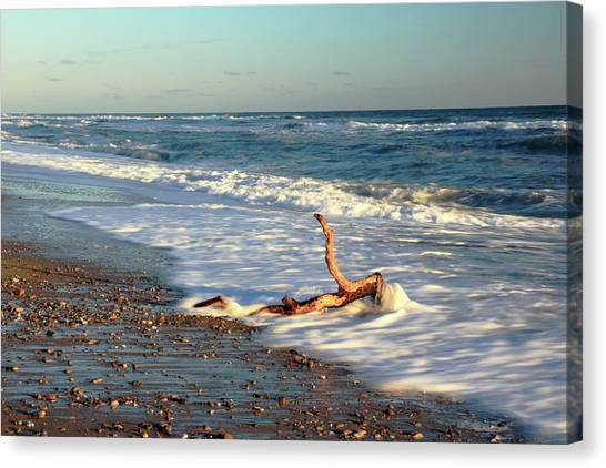 Driftwood In The Surf Canvas Print