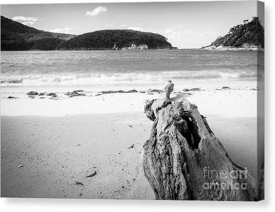 Canvas Print featuring the photograph Driftwood On Beach Black And White by Tim Hester
