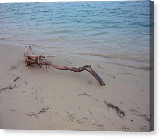 Driftwood On Ocean Beach Canvas Print by Adrianne Wood