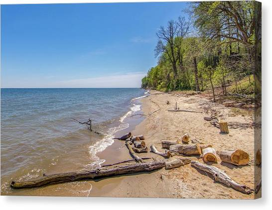 Canvas Print - Driftwood On The Beach by Charles Kraus
