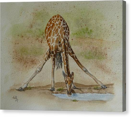 Drinking Giraffe Canvas Print