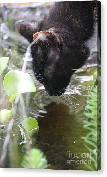 Drinking Kitty Canvas Print