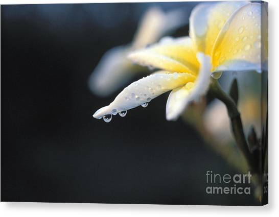 Reggie White Canvas Print - Dripping With Dew by Reggie David - Printscapes