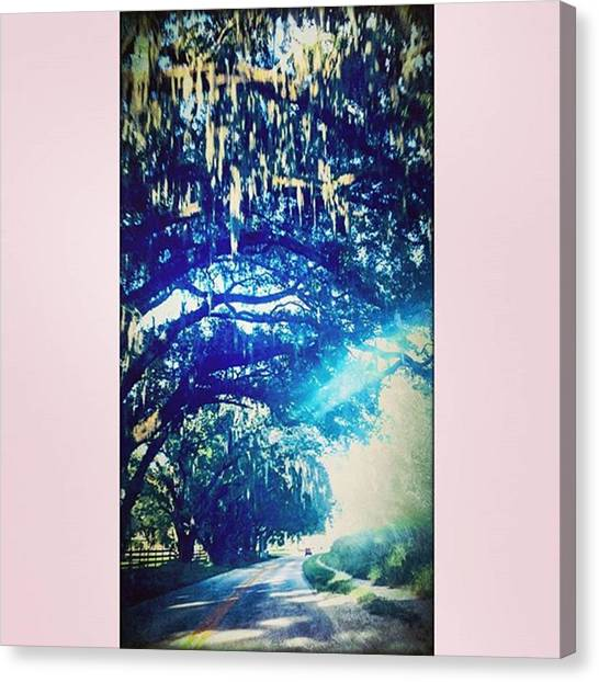 Driving Canvas Print - #driving #home #trees #tree #tops #moss by Peggy Hoefner
