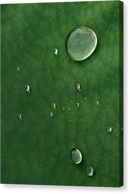 Droplet Of Life Canvas Print