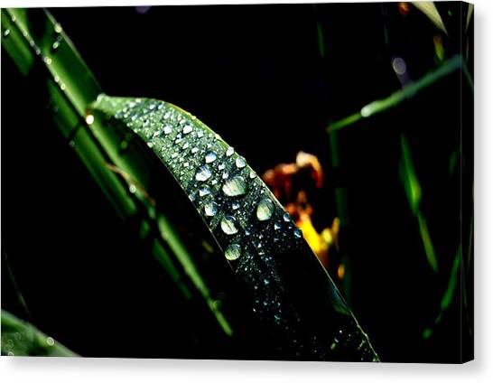 Droplets Of Water Canvas Print by Robert Scauzillo
