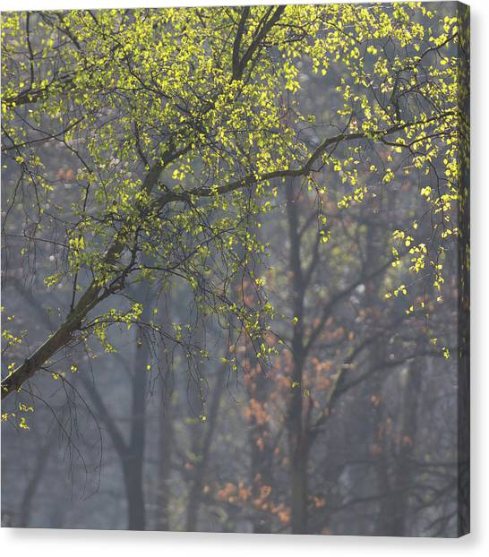 Sherwood Forest Canvas Print - Drops Of Green by Chris Dale