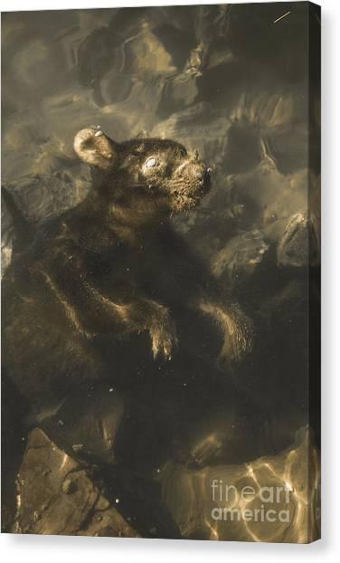 Carcass Canvas Print - Drowned Tasmanian Possum by Jorgo Photography - Wall Art Gallery