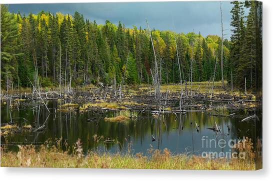 Drown Canvas Print - Drowned Trees by Maxim Images Prints