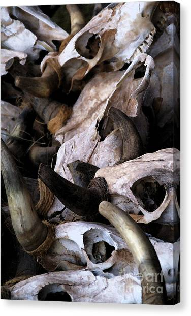 Dry As Bones Canvas Print