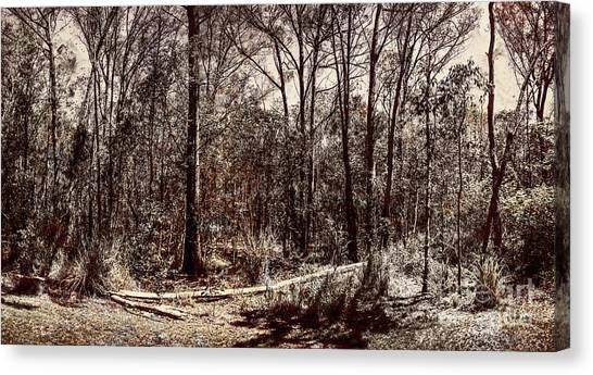 Canvas Print featuring the photograph Dry Autumn Landscape Of A Vintage Woodland by Jorgo Photography - Wall Art Gallery