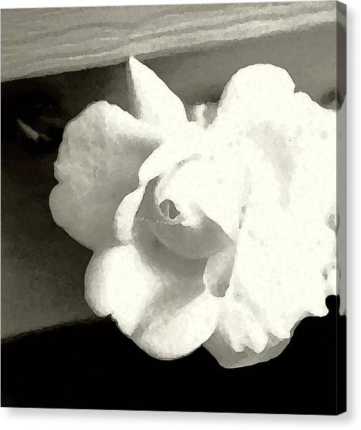 Dry Brushed Rose Canvas Print by Emily Kelley