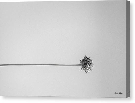 Dry Flower - Black And White Art Photo Canvas Print