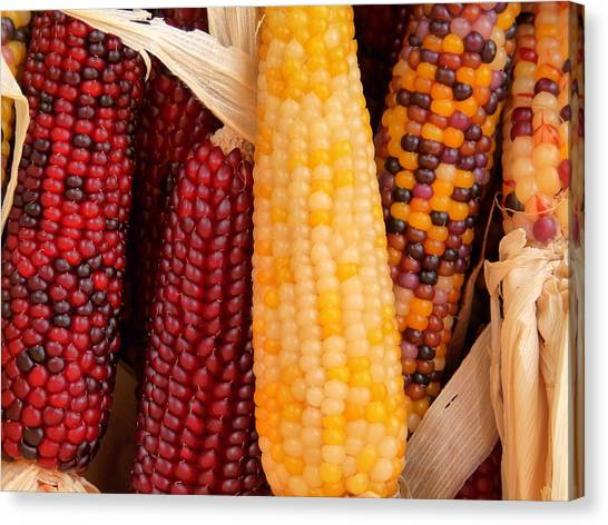 Dry Indian Corn Canvas Print