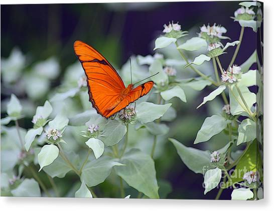 Canvas Print featuring the photograph Dryas Iulia by Patti Whitten