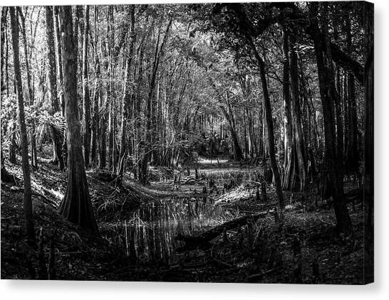 Bass Fishing Canvas Print - Drying Creek Bed by Marvin Spates