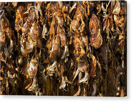 Drying Fish Heads - Iceland Canvas Print