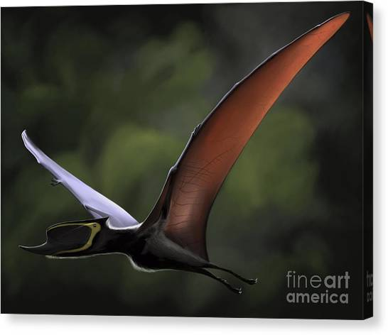 Pterodactyls Canvas Print - Dsungaripterus With Wings Spread by Michele Dessi