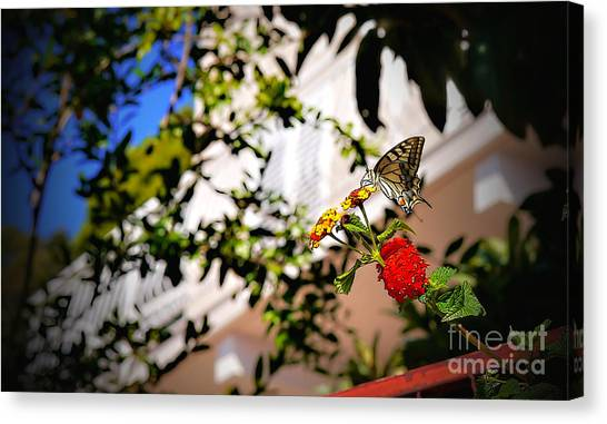 Dubrovniks Butterfly Canvas Print