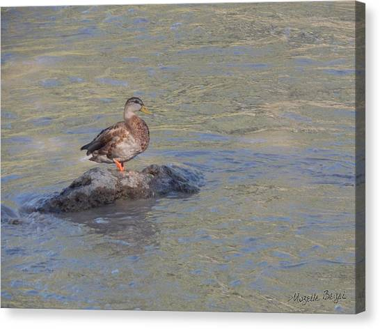 Duck Alone On The Rock Canvas Print
