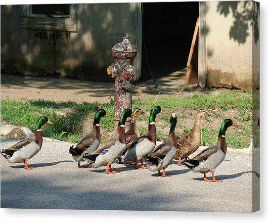 Duck And Hydrant Canvas Print