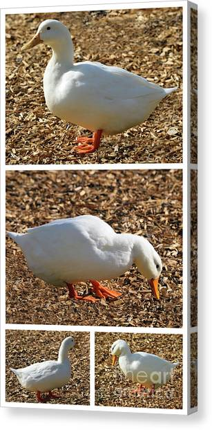 Canvas Print featuring the mixed media Duck Collage Mixed Media A51517 by Mas Art Studio