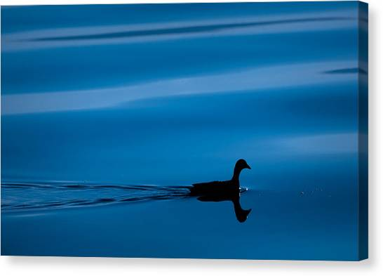 Duck Floating On A Lake Canvas Print by Dane Strom