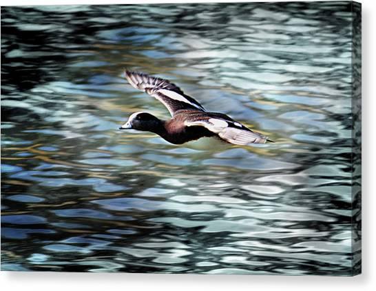 Duck Leader Canvas Print