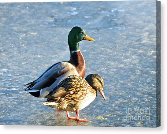 Duck Pair On Frozen Lake Canvas Print