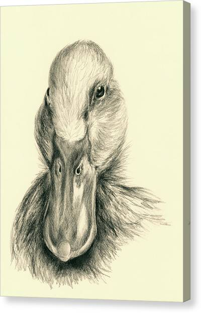 Canvas Print featuring the drawing Duck Portrait In Charcoal by MM Anderson