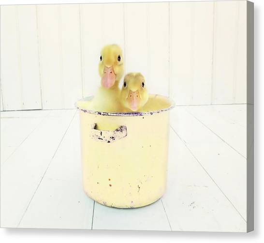 Gallery Wrap Canvas Print - Duck Soup - Yellow Version by Amy Tyler