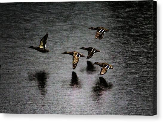 Duck Squadron Canvas Print