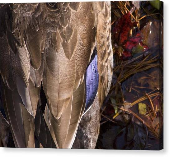 Duck Canvas Print by Steve Kenney