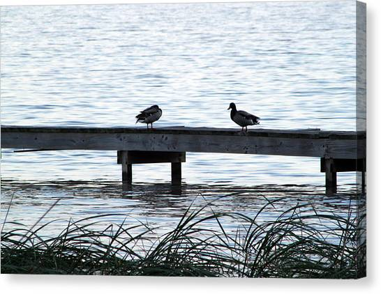 Canvas Print - Duck Walk by Evelyn Patrick