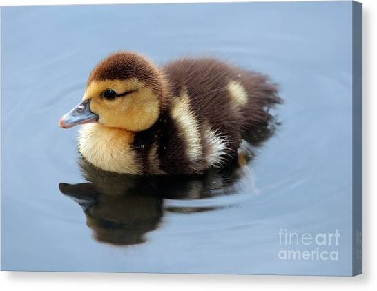 Duckling Canvas Print by Jeannie Burleson