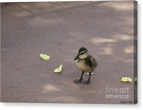 Duckling Canvas Print
