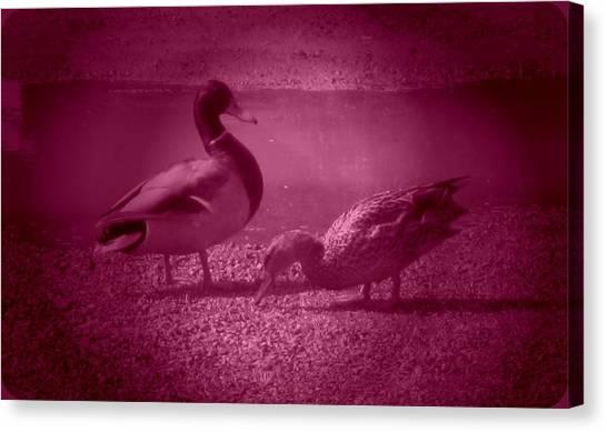 Ducks #1 Canvas Print