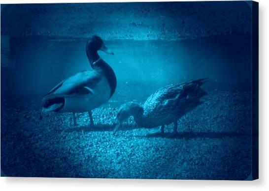 Ducks #2 Canvas Print