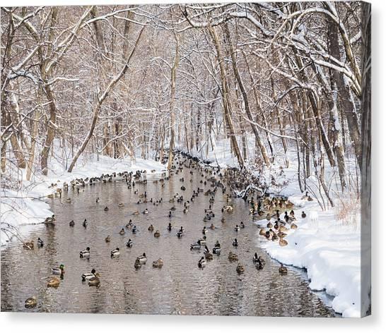 Ducks In A Creek Canvas Print