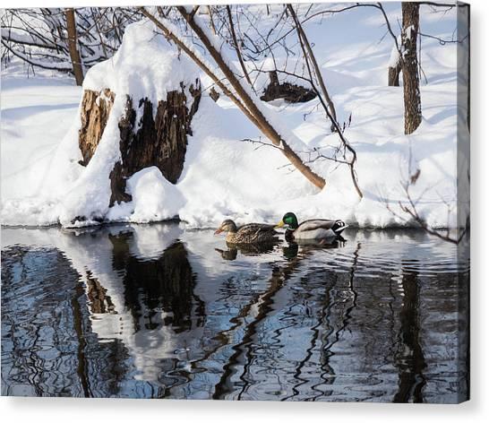 Ducks In Snow Canvas Print