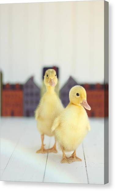 Large Birds Canvas Print - Ducks In The Neighborhood by Amy Tyler