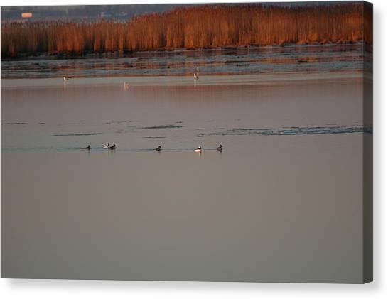 Ducks Canvas Print by Marc Van Pelt