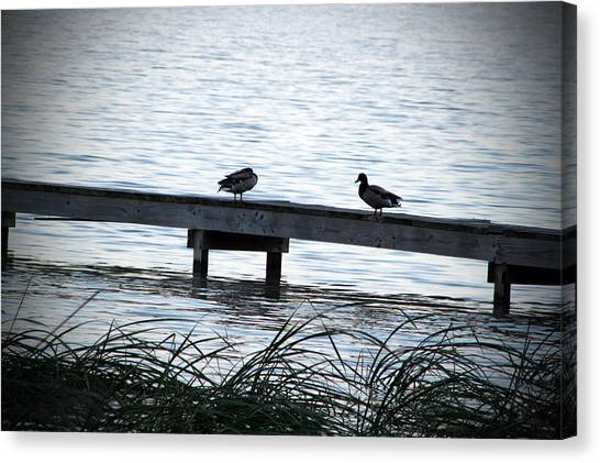 Canvas Print - Ducks On A Dock by Evelyn Patrick